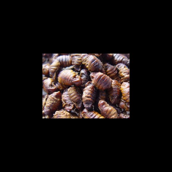 PremoFisch Seidenraupenpuppen 6L-12L